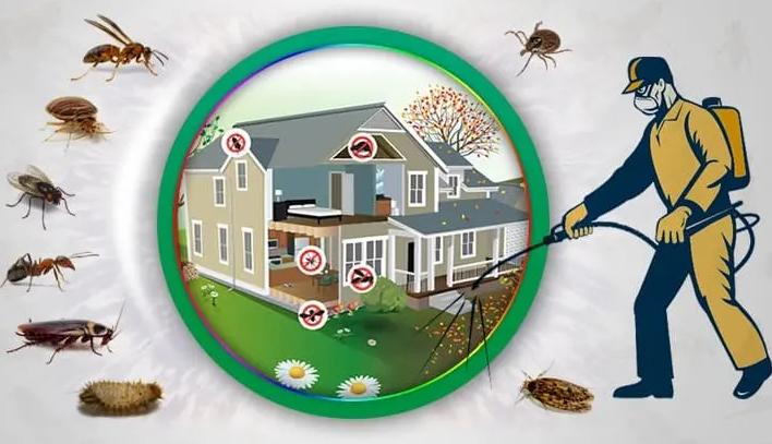 Kesin Çözüm Böcek İlaçlama